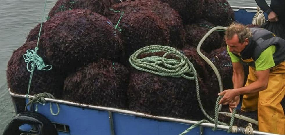 Los extractores de algas, «sorprendidos» por los recortes que anuncia Pesca para este año