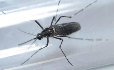 Burkina Faso libera sus primeros mosquitos transgénicos para combatir la malaria