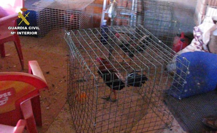 Detenidos dos cántabros en una redada contra las peleas de gallos en Valladolid