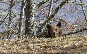 Dos de las 27 especies de animales y plantas europeas en peligro de extinción viven en Cantabria