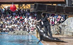 Reabre el recinto de los leones marinos del Parque de la Naturaleza de Cabárceno