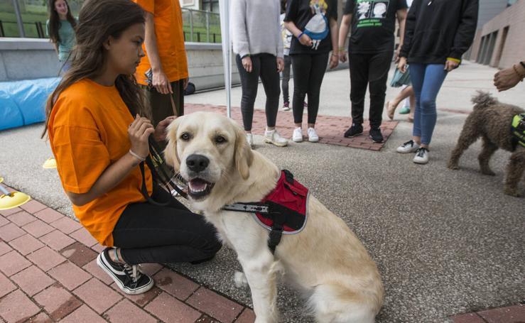 Ayuda canina para los niños de Valdecilla