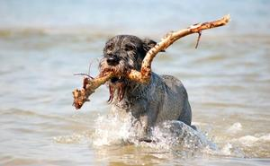 El peligro del agua del mar para tu perro