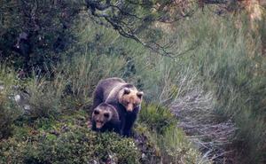 La segunda oportunidad del oso