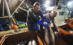 El «alto ritmo» de capturas de la flota puede acortar la costera de bonito