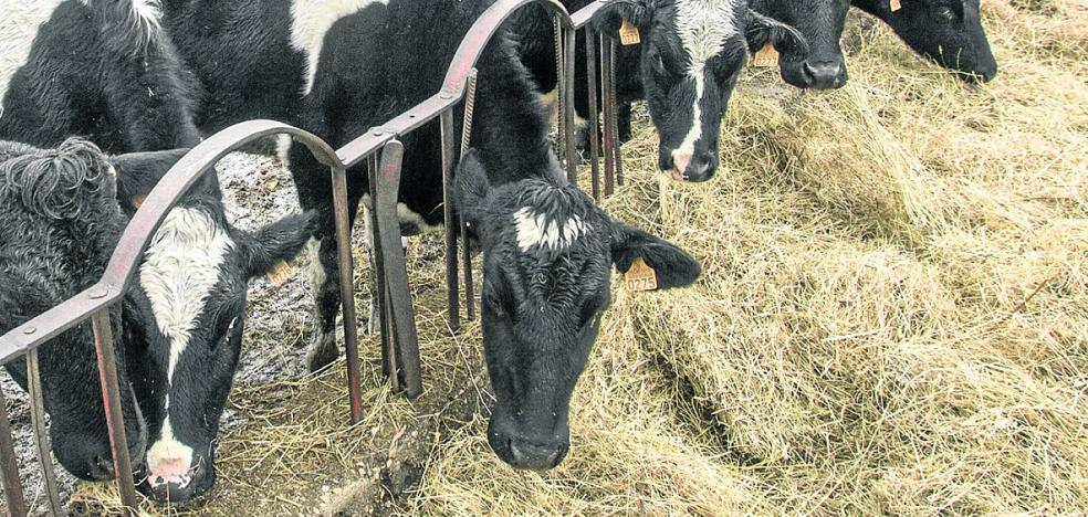 Los nuevos contratos lácteos vuelven a dividir a distribuidores y ganaderos