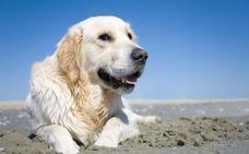 El PP presenta una moción para crear una zona acotada para perros en la playa de Laredo