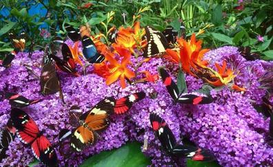 Fiesta de cumpleaños para las mariposas de Santillana