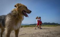 Nueve playas cántabras para ir con tu perro sin miedo a que te multen