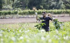 Un 'influencer' agropecuario