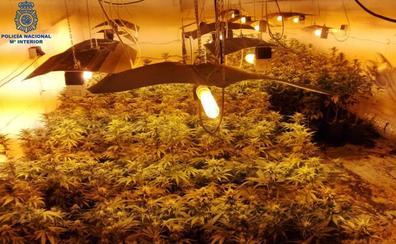 Desmantelado un sofisticado laboratorio de marihuana en Santander