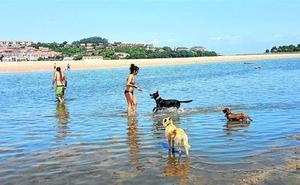 San Vicente se consolida como destino para turistas con perros