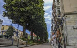 El Ayuntamiento propone seis podas en tres años para los magnolios de Pombo