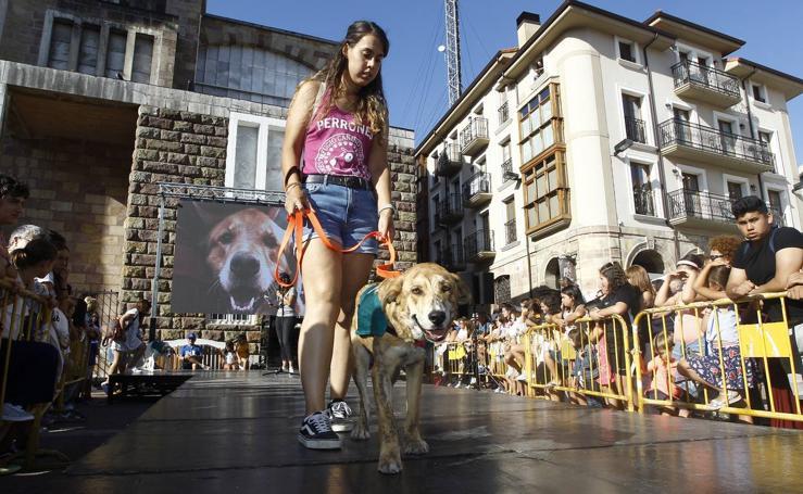 De día y de noche, la fiesta no para en Torrelavega