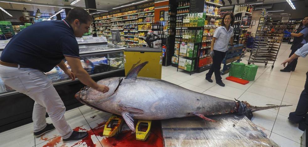 Un atún rojo de 375 kilos desembarca en un súper de Cantabria