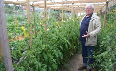A la reconquista del sabor: apasionada defensa de los tomates antiguos