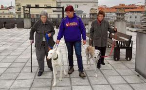 La sensibilidad de los galgos hecha terapia en Cantabria