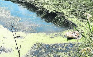 Aparecen varias aves muertas en los humedales de Cuchía