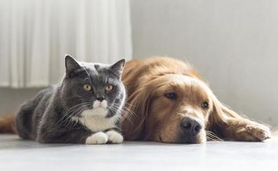 Las mejores aplicaciones para cuidar y entretener a tu mascota