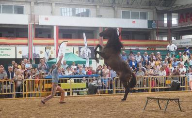 Fiesta del caballo en el Ferial