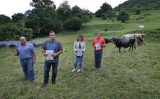 «No encontramos las vacas ni vivas ni muertas»