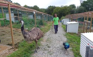 El criadero de aves El Redal, de Luey, inicia sus visitas guiadas