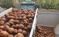 El Gobierno quiere impulsar la denominación de origen para la patata de Valderredible