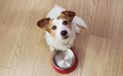 Recetas con comida casera para perros