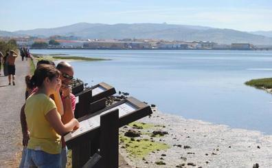 Santoña celebra del viernes al domingo el Festival de Migración de las Aves