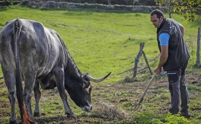 57 jóvenes ganaderos y agricultores podrán estrenar instalaciones con ayudas públicas