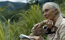 Jane Goodall da voz a la campaña por el planeta de Los40