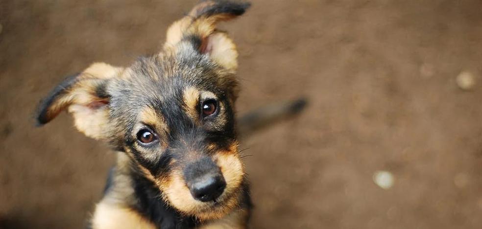 Fatiga por compasión, el precio de ayudar a los animales