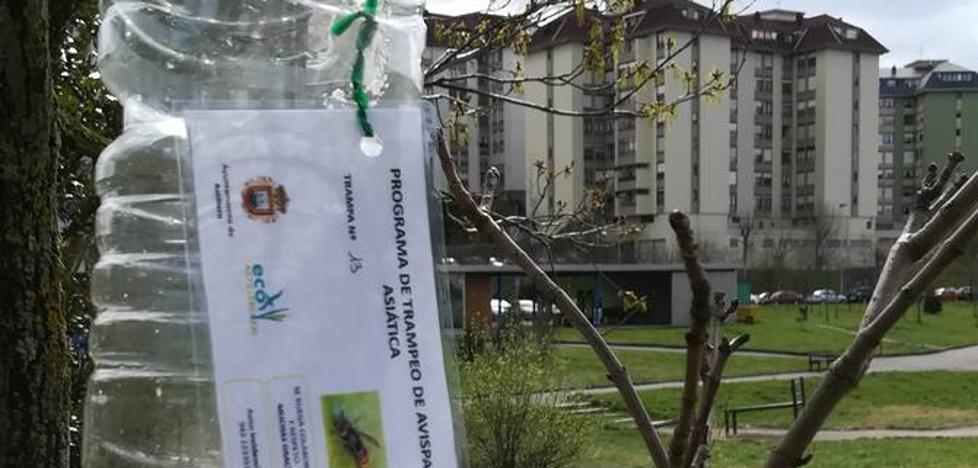 Astillero comienza la campaña de trampeo otoñal de avispa asiática