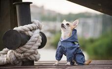 Los perros cántabros, a la conquista de la pasarela en El Corte Inglés
