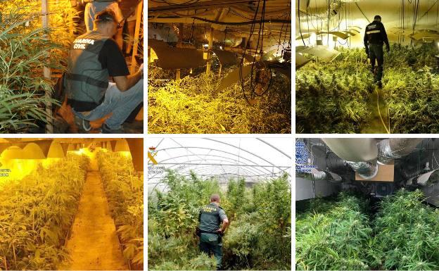 La Guardia Civil interviene en 15 días más de 2.500 plantas de marihuana en Cantabria