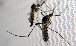 El dengue golpea Honduras con 80.000 casos en la peor epidemia del último medio siglo