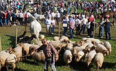 Hoznayo se prepara para celebrar la Feria de San Lucas el próximo día 19