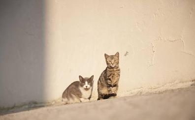 Polanco abre a los vecinos su ordenanza de protección animal