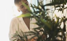 Cinco consejos para cuidar tus plantas de interior