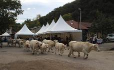250 cabezas de ganado en la feria del Pilar en Camaleño