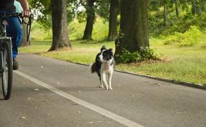 Descubre las claves para pasear con tu perro en bicicleta