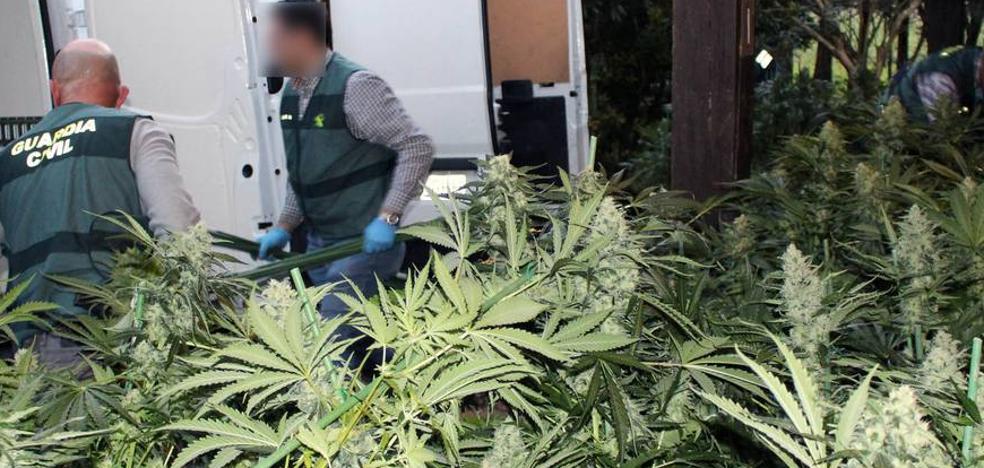 Jaque a la marihuana en la 'Cantabria verde'