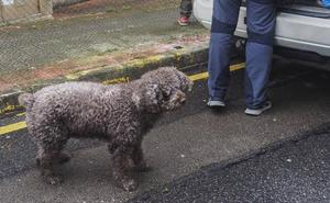 Muere Marley, el perro de la Guardia Civil experto en restos humanos