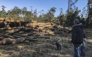 Medio Ambiente archiva la sanción a la empresa que taló el Bosque de Loredo