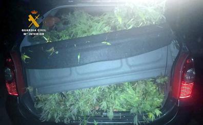 Detenido tras aparcar el vehículo en San Felices de Buelna con 12 kilos de marihuana en su interior