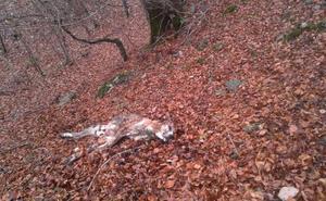El PP pide un control más ágil y resolutivo de los daños provocados por la fauna silvestre