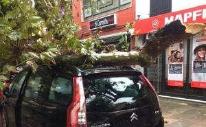 Una rama de gran tamaño cae sobre un coche en Cabezón de la sal y hiere a una mujer