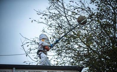 Los ayuntamientos critican la lista de espera de Tragsa para quitar nidos de avispa asiática
