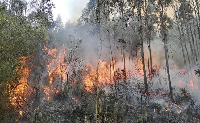 Identificados dos presuntos autores de incendios forestales provocados en Cantabria