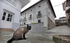 Comillas esteriliza más de sesenta gatos con el método CES